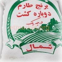 برنج طارم هاشمی دوباره کشت