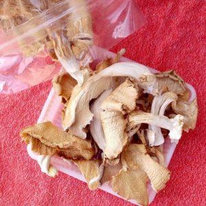 قارچ صدفی خشک