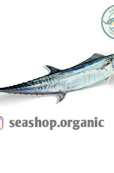 فروش ماهی شیر