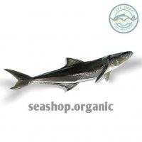 ماهی سکن (سکولا)- فروش فله کیلویی