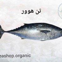 ماهی تن هوور – فروش فله کیلویی
