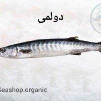 ماهی باراکودا(دولمی)