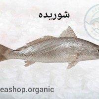 ماهی شوریده – ماهی خوشمزه فروش بصورت کیلویی فله