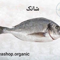 ماهی شانک تازه فروش بصورت کیلویی