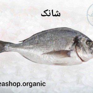 فروش ماهی شانک