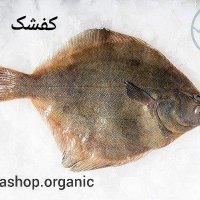 ماهی کفشک (کوشک) – فروش بصورت کیلویی و فله ای