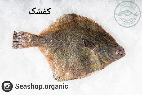 کفشک ماهی